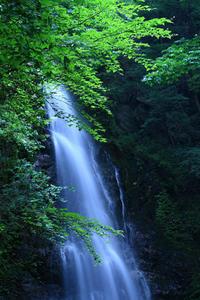 涼やかな清流 - 小さな森の写真館 (a small forest story)