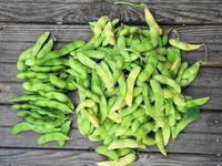 プランター野菜の成長記録6 枝豆の収穫 - 風見鶏日記