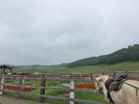 horse riding - 旦那@八丁堀