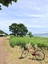 bicycle riding - 旦那@八丁堀