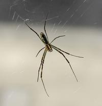 蜘蛛と雲 - 黒猫瓦版
