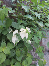 植物的生活833 - Atelier Botanique COCA-Z