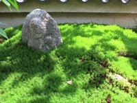暑さの中の緑 - g's style day by day ー京都嵐山から、季節を楽しむ日々をお届けしますー