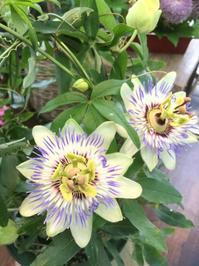 【眠りの質】を見直す - ルーシュの花仕事