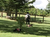 17年8月5日 八ヶ岳でランラン♪ - 旅行犬 さくら 桃子 あんず 日記