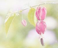 チロリアンランプ 4 - 光 塗人 の デジタル フォト グラフィック アート (DIGITAL PHOTOGRAPHIC ARTWORKS)