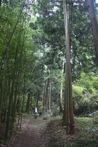 施餓鬼前日 - 鹿深の森