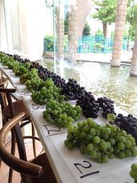 葡萄の収穫 - 木洩れ日のなかで