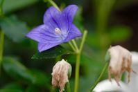 FLOWERS ー 11 - Genie