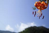 台風前の夏ゾラ・・・自主普請 - 朽木小川より 「itiのデジカメ日記」 高島市の奥山・針畑郷からフォトエッセイ