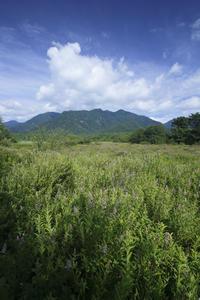 ホザキシモツケとノビタキ - 雅郎の花鳥風月