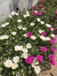 今日は広島に原爆が落とされてから72年目 - やわらかな風の吹く場所に:母乳育児を応援