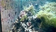 須磨水族園の色に とける - SONOPIENA