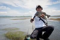 浜名湖へ渓流へ、そしてまた浜名湖へ‥ - 鈴木寿のブログ  フライフィッシングな毎日