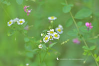 愛おしい花 - お花びより