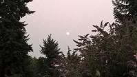 カナダの山火事&「大人のブルーガーデン」を目指して - コテージ便り