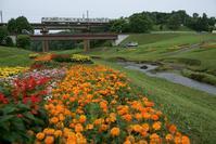 河川敷の花 - advance*k