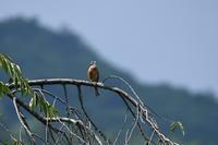 西湖野鳥の森公園① - Buono Buono!