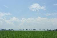 田んぼ - 合歓の風