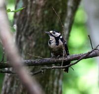 八ヶ岳付近散策ではあったが(その1)・・・ - 一期一会の野鳥たち