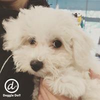 Hello わたあめ !! - Doggie Do!! / good dog and hello cat !!
