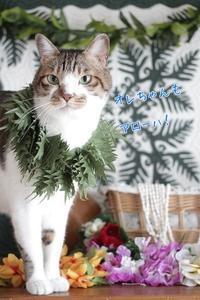 アローハ♪に協力してくれた猫 - きょうだい猫と仲良し暮らし