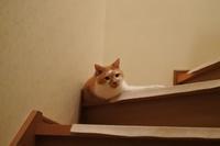 雑誌掲載のお知らせ - 「両手のない猫」チビタと愉快な仲間たち