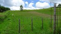 標高1400mのブドウ畑 - 宮里龍治アトリエ