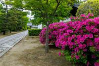 ツツジ咲く智積院 - 花景色-K.W.C. PhotoBlog