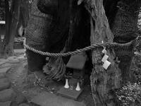 静岡@三島(4)#三島神社 - Oh! Photo