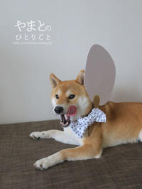 うちわと手ぬぐいと柴犬 - yamatoのひとりごと