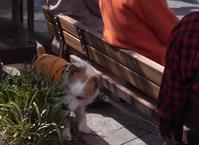 Sniffing dog - いんちきばさらとマクガフィン