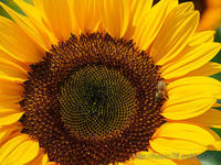 真夏の花 - デジタルで見ていた風景