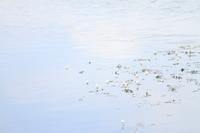 水面を可愛く彩って - 心 色