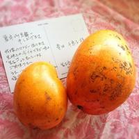 """☆夏にちょうどの""""マンゴバター""""でつくるおひさんにあたったあとのローション☆ - 神戸でアロマテラピーを。"""