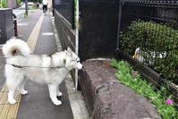 台風バイバイ♪ ようやくお散歩だ! (^o^) - 犬連れへんろ*二人と一匹のはなし*