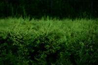 台風の影響は・・・ - Yoshi-A の写真の楽しみ
