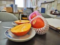 沖縄からマンゴーが届きました! - 浦佐地域づくり協議会のブログ