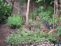 種子播種 - 特定非営利活動法人サヘルの森 スタッフブログ