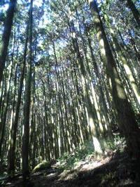回想 〜岩屋山〜 - アロマでひとやすみ