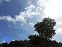 夏の思い出作り - 千葉県いすみ環境と文化のさとセンター