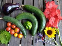 8月いっぱつめの収穫〜うちの庭〜 - 日々ニコニコ