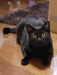猫のお留守番 ミミちゃん編。 - ゆきねこ猫家族