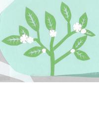白い花の木 - illustration note