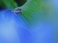 緑ちゃん目線ください - 「美は観る者の眼の中にある」