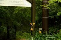 涼しい山にGO! *六甲高山植物園へ * - 静かな時間