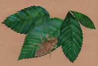 蝉の抜け殻のような仕事ぶり、とか? 切り絵コラージュ - 手製本クリエイター&切絵コラージュ作家 yukai の暮らしを愉しむヒント
