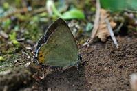 ジョウザンの2化 - 蝶と蜻蛉の撮影日記
