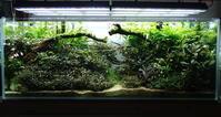 【昭和】120センチブセ水槽に新しい仲間【プラティ】 - 癒しのアクアライフ