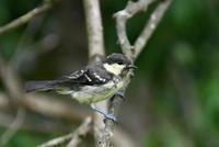 西湖野鳥の森公園② - Buono Buono!